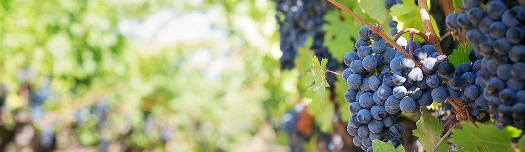 Focus sur les produits AOC de Corse